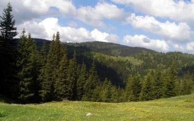 Гори и биоразнообразие – международен ден на горите